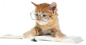 kitten-reading